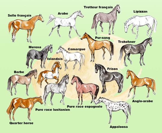 Les races de chevaux ... dans Animaux races_chevaux